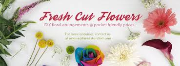 Orchid Cut Flowers - fresh flowers by feo far east orchid home facebook