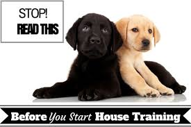 house training basic need to know facts before starting