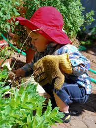 herb gardens herb gardens for children gardening know how