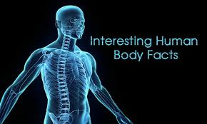 Human Body Picture Amazing Facts About Human Body U2013 Zoopfeed
