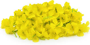 Metz Flowers - mustard flowers information recipes and facts