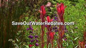Backyard Pictures Save Our Water Rebates