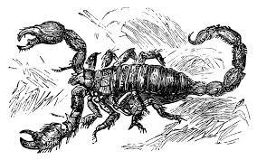 free vintage scorpion clip art image old design shop blog