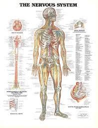 Anatomy And Physiology Skeletal System Test Skeletal System Essay