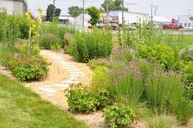 native maryland plants plan to plant native build a pollinator garden city wildlife