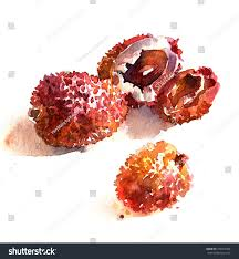 lychee fruit inside lychee fruit half litchi litchi bone stock illustration 739917463