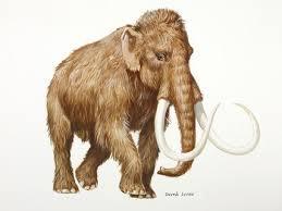 depiction paleolithic woolly mammoth derek lucas
