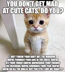 Dont Be Mad Meme - cute cat meme imgflip