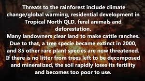 facts and threats daintree rainforest youtube