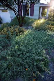 green up your landscape with living mulch