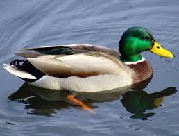 duck test wikipedia