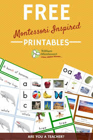 Printable Montessori Curriculum   free printable life cycle of a penguin montessori free and