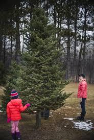 at 75 a minnesota christmas tree farmer isn u0027t slowing down