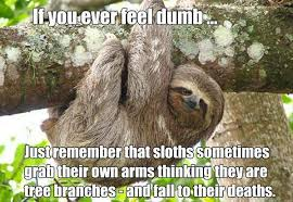 Sloth Meme Pictures - sloths grab their own arms why your meme is wrong