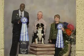 belgian shepherd edmonton dog obedience trainers wetaskiwin animal clinic