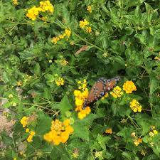 native plants for butterfly gardening benton soil u0026 water get going explore dream discover