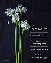 paperwhite flowers flower glossary paperwhite design sponge