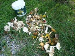 mushroom poisoning in dogs u2013 deaf dogs rock