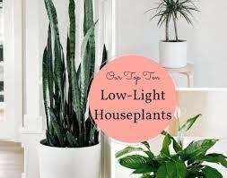 indoor plants that don t need sunlight indoor tree low light home designs ideas online tydrakedesign us