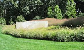 mass plantings ornamental grasses work inspiration