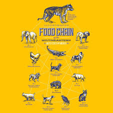 illustrated food chain of the southeastern united states