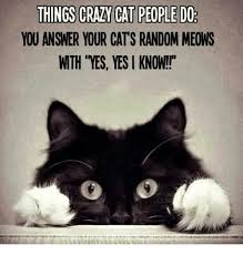 Random Cat Meme - you answer your cat s random meows with yes yes i know cats meme