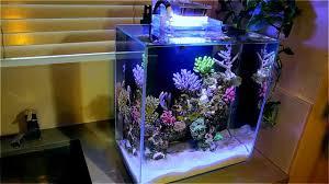 Fluval Edge 12g Nano Reef Youtube