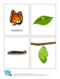 butterfly life cycle images brainpop educators