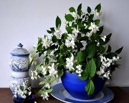 Fragrant Indoor House Plants - decorative and good smelling houseplants wearefound home design