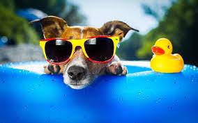 cool dog live wallpaper google play store revenue u0026 download