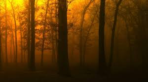 forests trees nature sunset golden fog night forest hd wallpaper