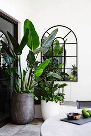 home plants decor style tip tree potting paradise interior plants and bird