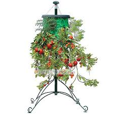Upside Down Tomato Planter by Topsy Turvy Upside Down Tomato Planter Vertical Garden Wall