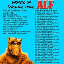 Alf Meme - funny alf memes alf best of the funny meme