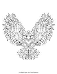 Patterned Flying Owl Drawing Illustration 269 Best Owl Coloring Pages For Adults Images On Owls