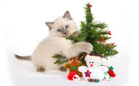 cat with christmas tree wallpapers cat with christmas tree stock