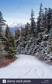 narrow tree lined mountain road in southeast alaska in winter with