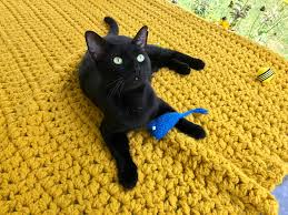 instagram famous black cats for black cat day