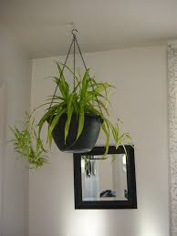 plant for bedroom 0 awesome house plants bamboo house and floor plan house and