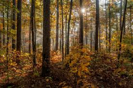 Alabama forest images Talladega national forest in fall by kenny walters the locust jpg