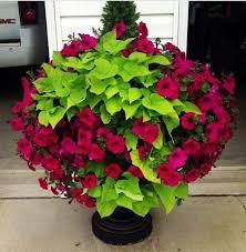 Potted Plant Ideas For Patio best 25 outdoor flower pots ideas on pinterest outdoor potted