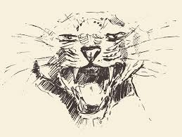 leopard head attacking pose style drawn sketch stock vector