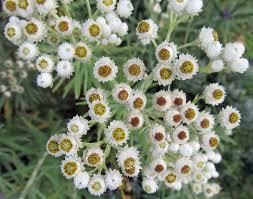 drought tolerant plants u2013 awkward botany