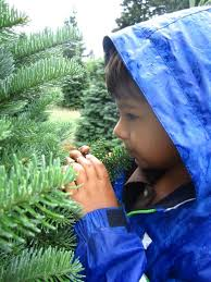 st nicholas trees
