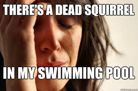 Dead Squirrel Meme - there s a dead squirrel in my swimming pool first world problems