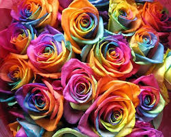 multicolored roses multi colored roses fiori idea immagine