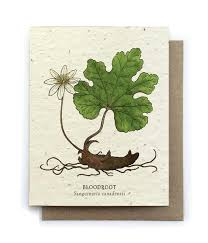 plantable paper botanical greeting cards plantable seed paper 15 designs to