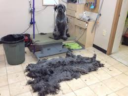 diy dog grooming table pro tips for diy dog grooming dogster