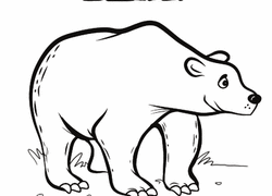 bear coloring pages u0026 printables education