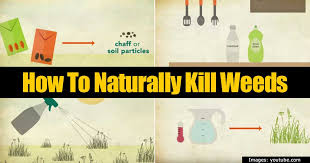 How To Remove Weeds From Patio Garden Weeds 8 Ways On How To Kill Weeds Naturally
